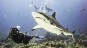 shark-diving_marcduf_780x440